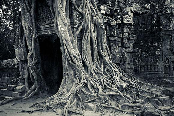 The overgrown doorway of Ta Som