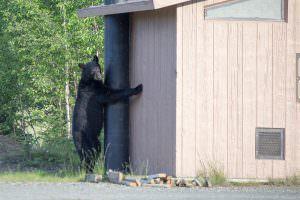 Bear rest stop