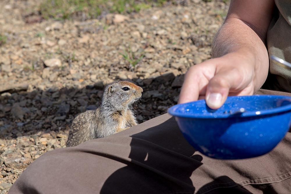 Squirrel lunch thief