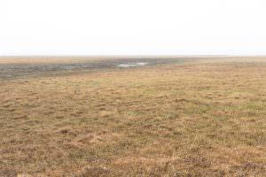 Mist on the Arctic Tundra