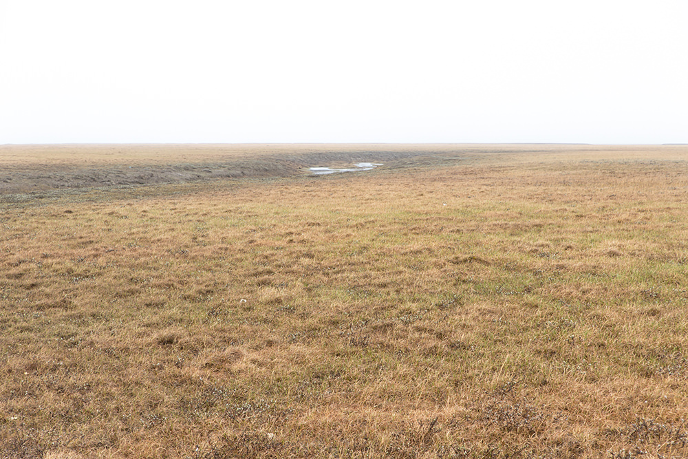Mist on the Arctic Tundra