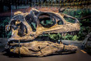 dinoasaur