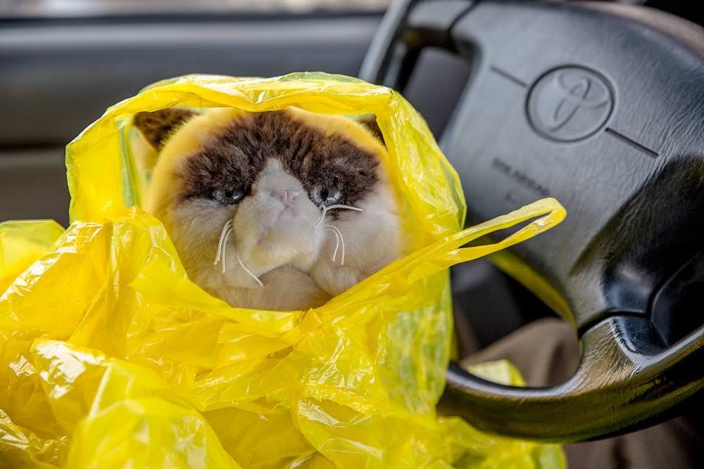 Grumpy cat in a poncho