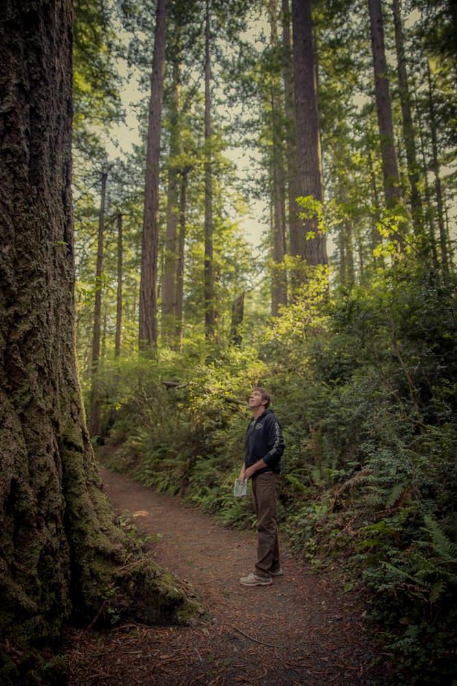 Coastal Redwoods towering above.