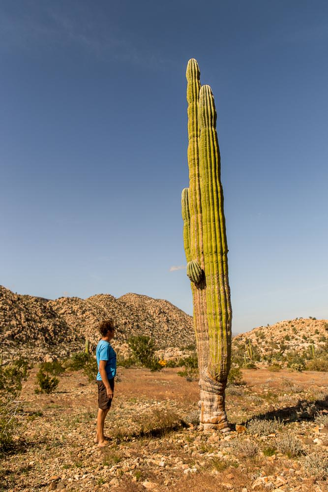 Rather large cactus.