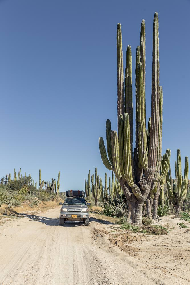 On the road inland, we unsurprisingly saw a few more cacti