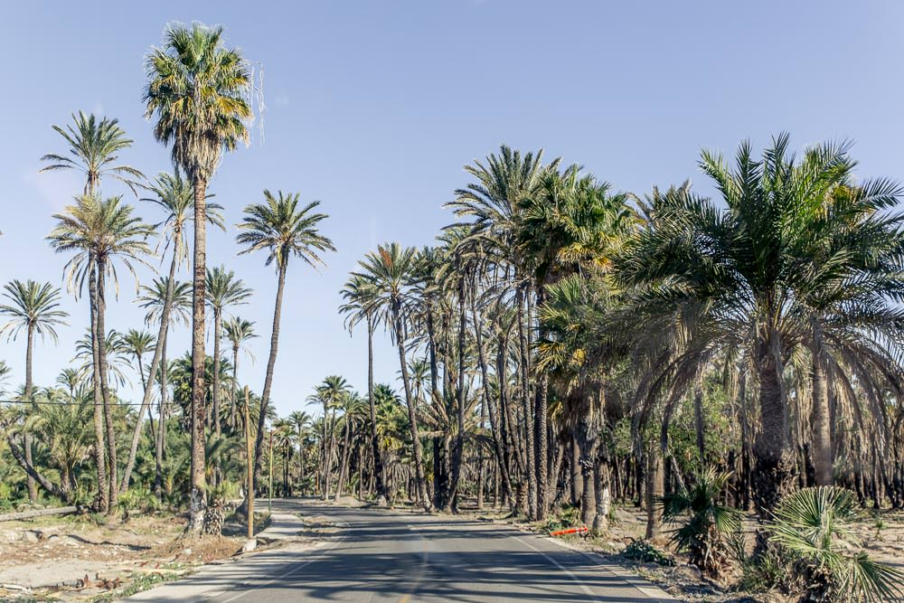 Driving through a palm tree grove