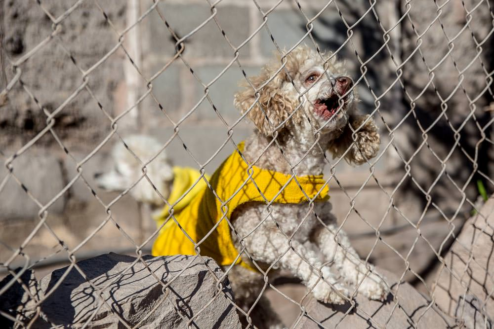 Not all the dogs in Mulegé were as friendly. There were four of these death poodles in yellow jackets. They all wanted our blood. Luckily this sturdy fence foiled them.