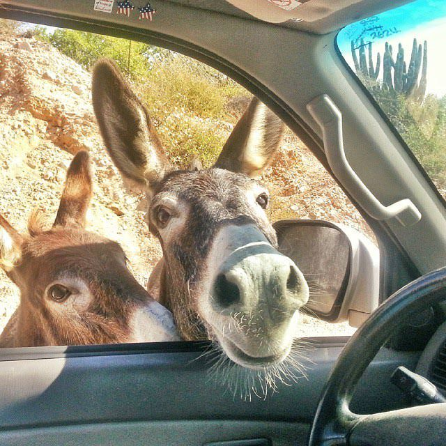 License and registration please. Also, do you have any carrots? The police were real asseson the East Cape Road.