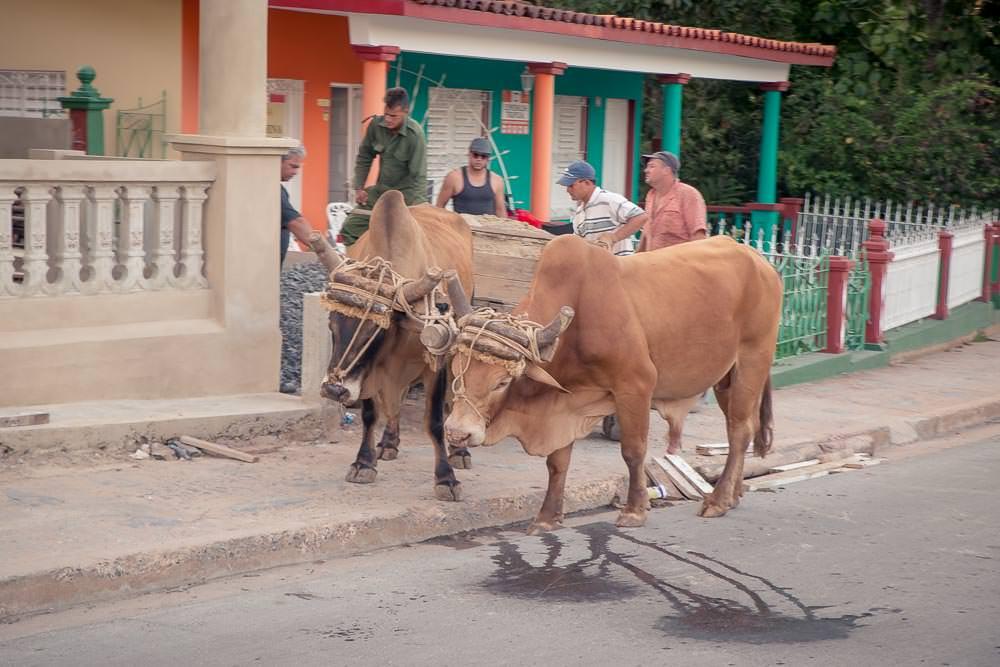 Possible transport option for a return to Havana?