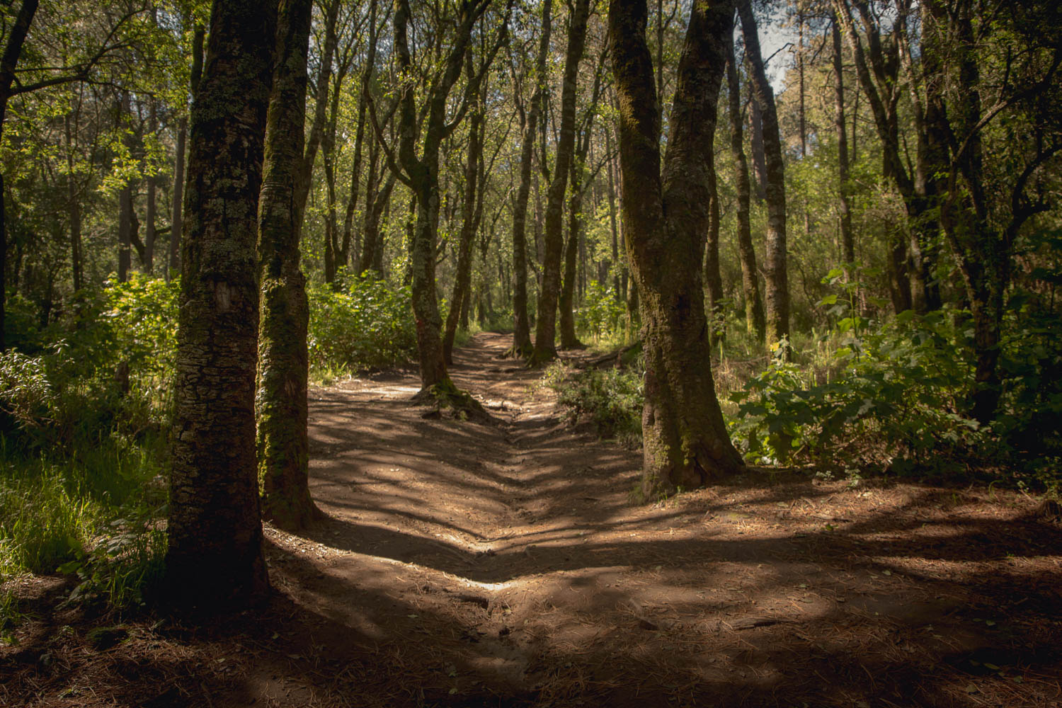 Path through the forest, Volcán Malinche.