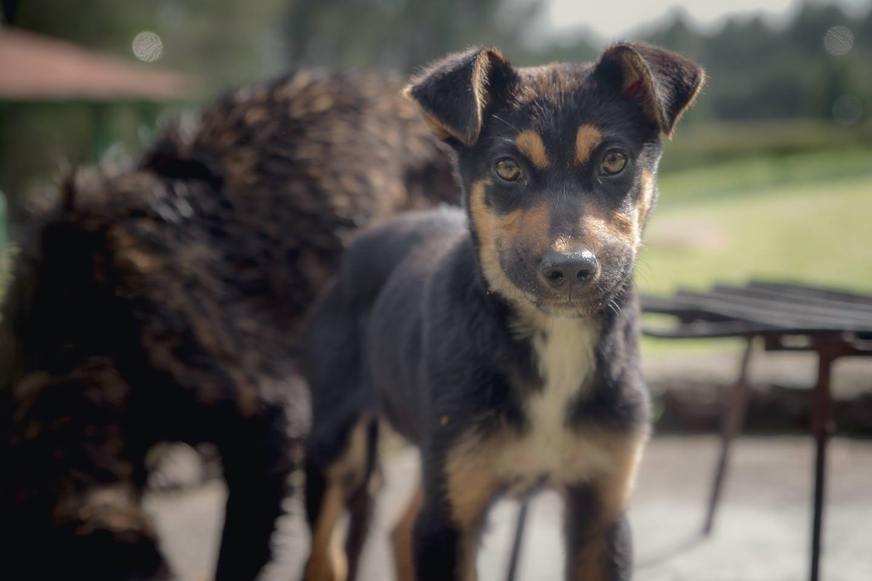 Friendly puppy