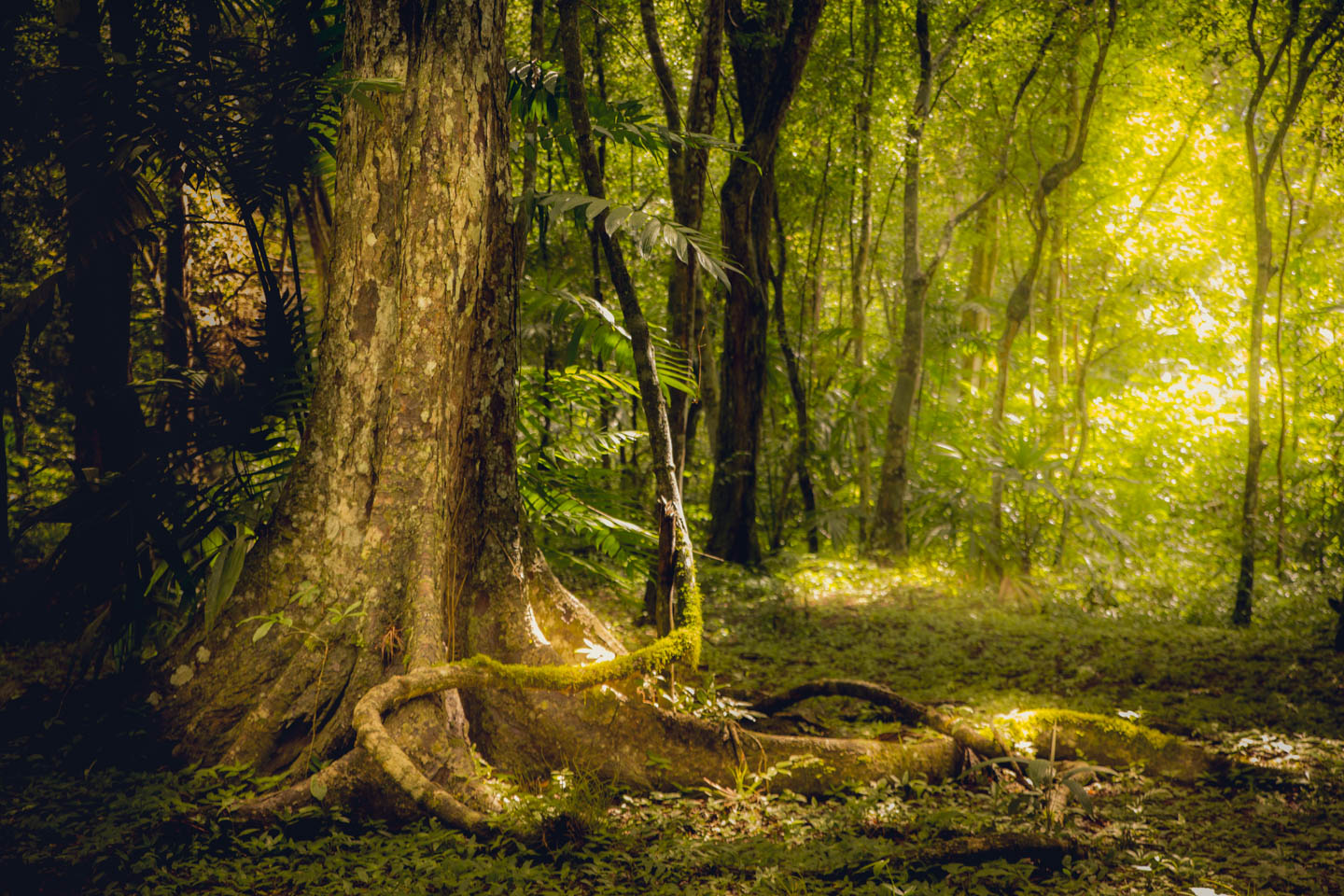 It is hard to resist photographing the dappled sunlight passing through the dense jungle canopy.